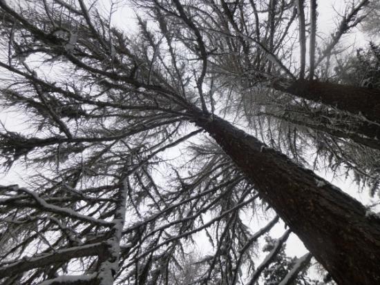 Courmayeur, Italy, Ski touring, freeride, off-piste, backcountry, Alpine Energy Guiding, mountaineering & ski adventures, Andrew Lanham Mountain Guide, Chamonix, Aosta Valley, Swiss, lyngen alps